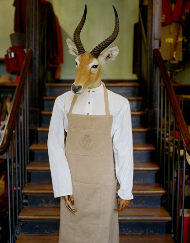 ok-antilope.jpg